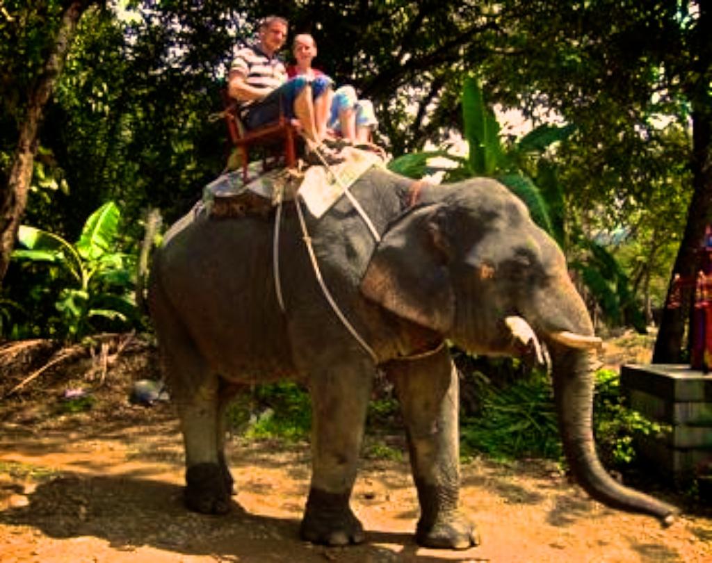 elephanttrakking