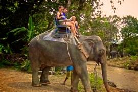 nunghouse khao sok elephant trek